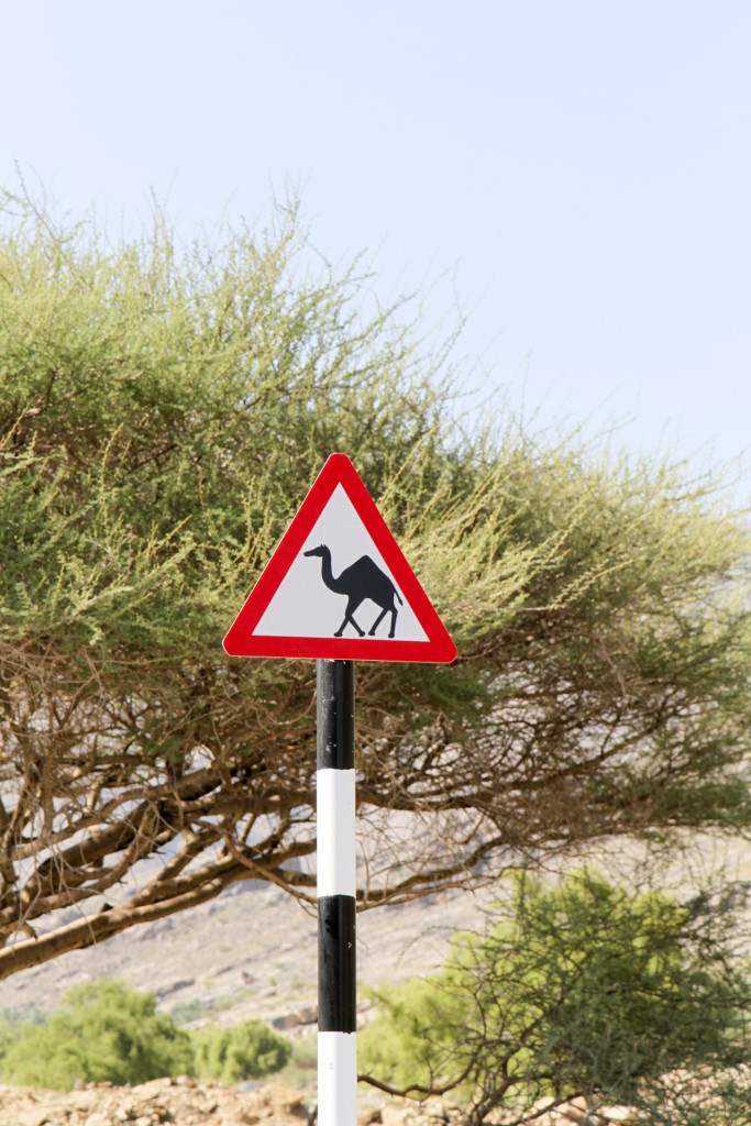 Other countries... Different roadsigns.
